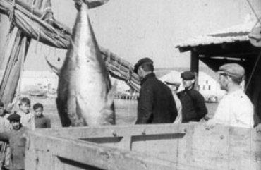 imagen de Carlos Velo y Fernando G. Mantilla. Almadrabas, 1934. Copia procedente de la Filmoteca Española, Madrid